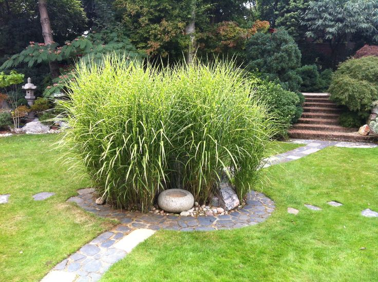 Bamboo surrounded by a stone circular arrangement with basin. The pathway goes through the centre of this feature.