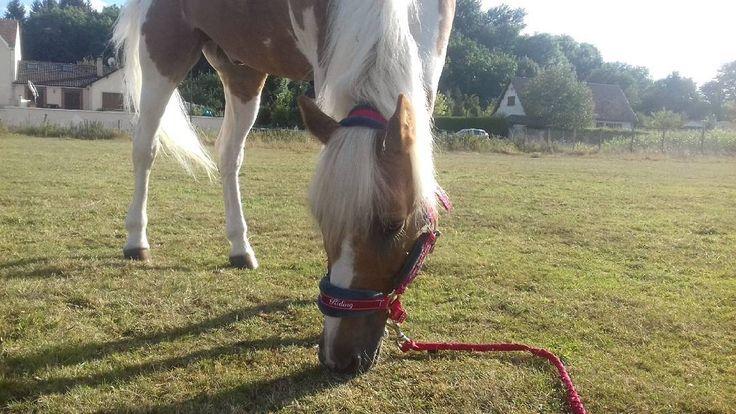 """""""Mon inspiration de tous les jours""""�� - - - #horse #cheval #pony #poney #best #of #the #world #meilleur #du #monde #cute #chou #baby #bébé #King #ride #equestrian #love #lui #ma #vie #mon #sang #team #pie #palomino #jumpy #j #elsa http://misstagram.com/ipost/1572456592581175277/?code=BXSfPCRhaft"""