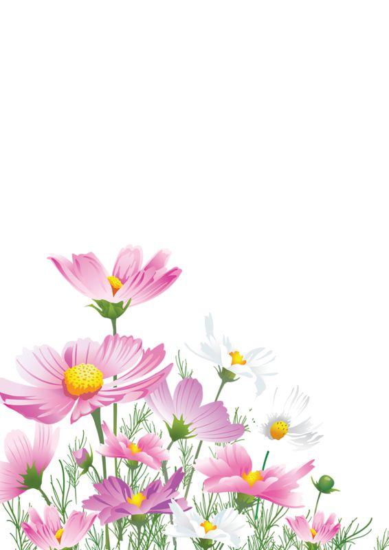 Фон для открытки полевые цветы