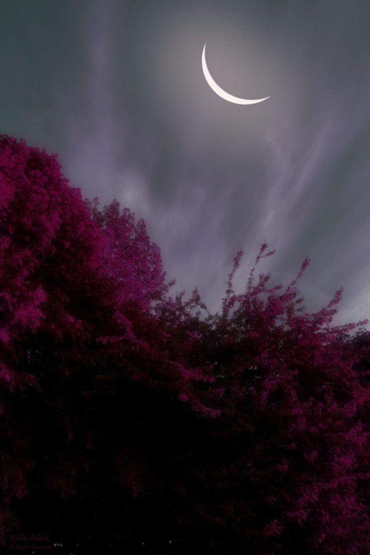 love-abia:  Mist and Moon by Abi Ashra (Tumblr)
