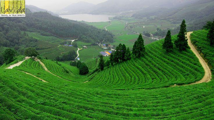 Darjeeling – West Bengal