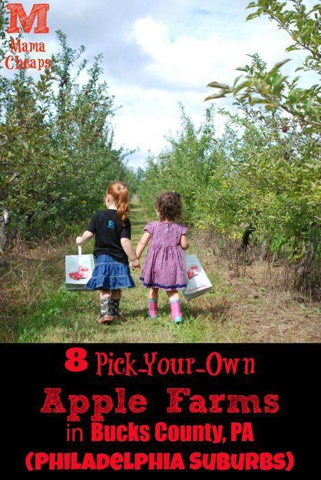 8 Pick-Your-Own Apple Farms in Bucks County, PA (Philadelphia Suburbs)