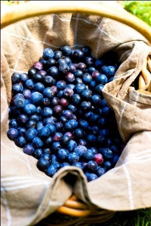 The Coffs Coast is known for having great blueberry farms!