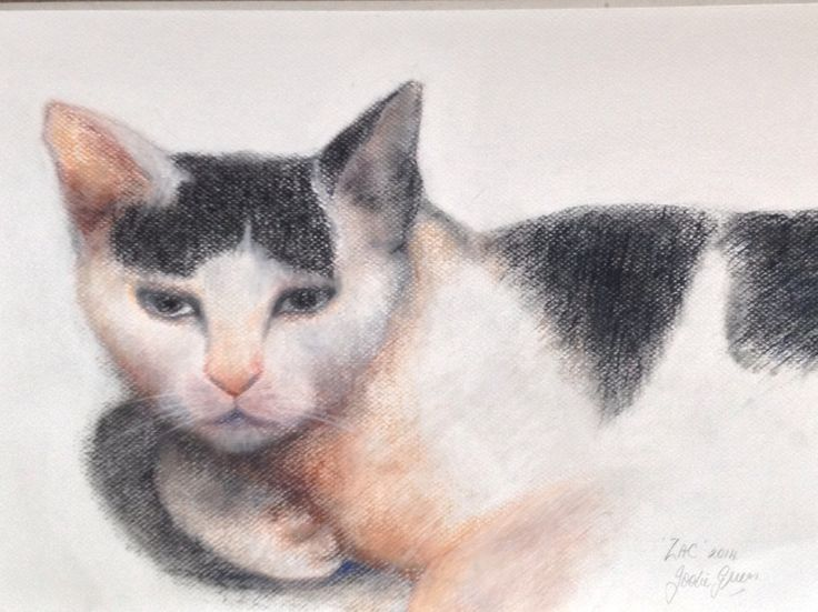 My drawing of friend's beloved cat 'Zac' Pastel on paper