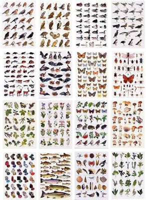 Set of 18 Identification Postcards - frame these and hang above nature table.