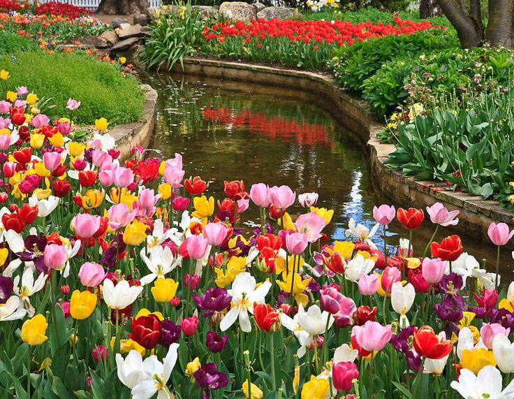Tulips At Bowral Jigsaw Puzzle In Flowers Puzzles On
