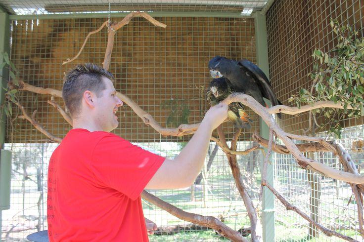 Animal Encounter - Cockatoo's