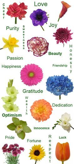 Flower Color Meanings Chart