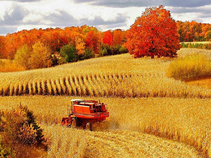 BEAUTIFUL FALL HARVEST PICS - Google Search | Autumn scenery, Scenery, Farm life