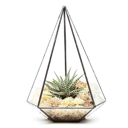 Aztec Jewel Terrarium with Plant