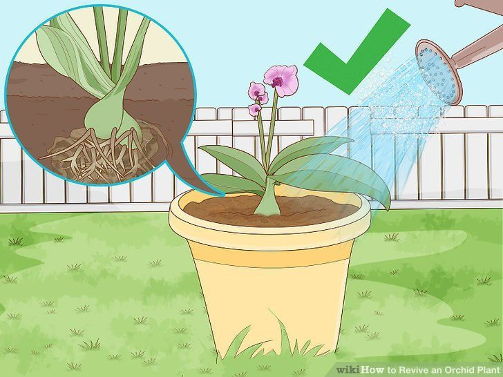 How To Revive An Orchid Plant 9 Steps With Pictures Wikihow In 2020 Orchid Plants Orchid Plant Care Indoor Orchids