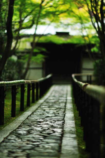 Daitoku-ji Temple, Kyoto, Japan 高桐院参道 #緑 #Green #Kyoto