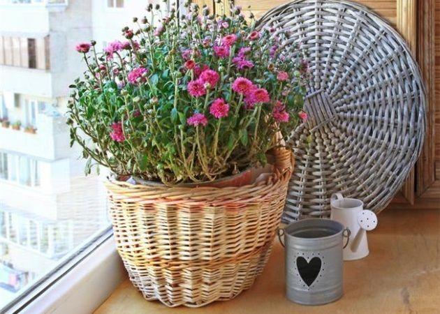 Ποια φυτά βελτιώνουν την ποιότητα του αέρα στο σπίτι