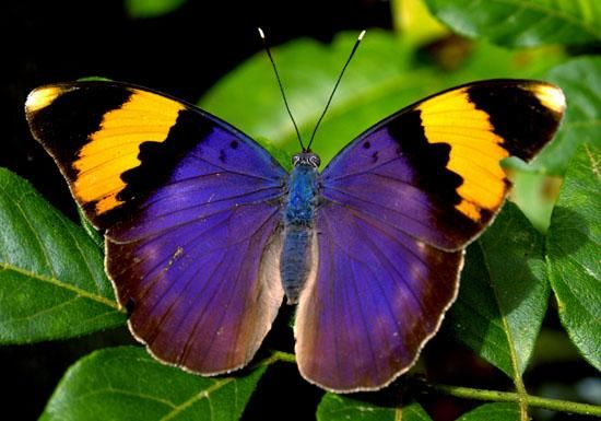 101 Best EVERYTHING BUTTERFLIES Images On Pinterest