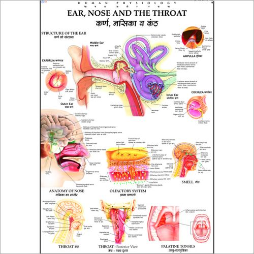 29 best ENT ears nose throat images on Pinterest | Ear, Ears and ...