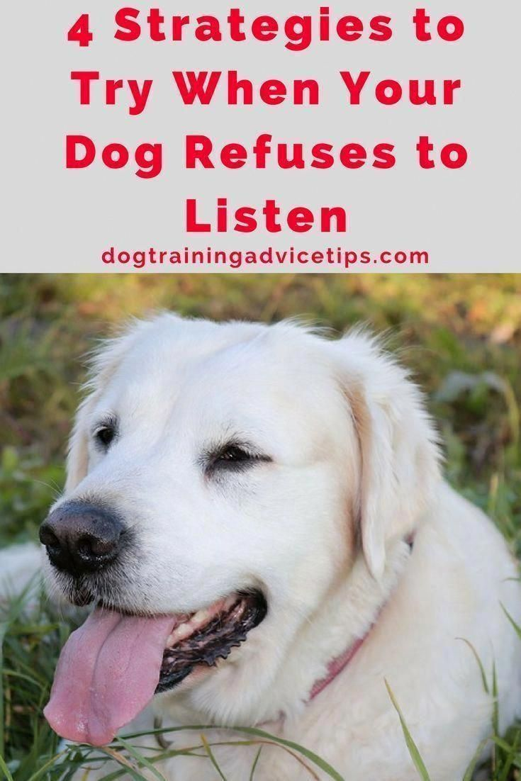 If You Do Not Know How To Train The Biting Practice Out Of Your Pet You Can Proceed To Ask Tips From You With Images Dog Training Near Me Dog Training