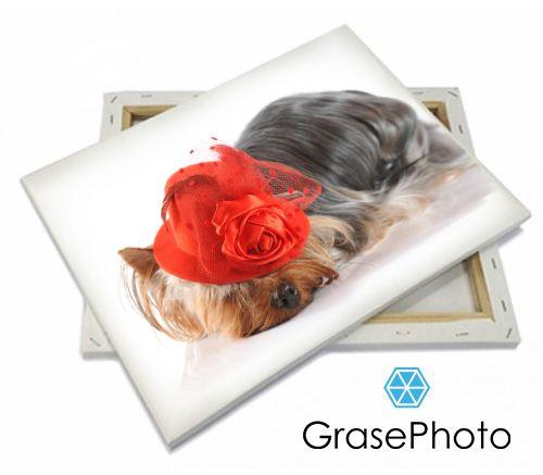 Печать фотографий на холсте | GrasePhoto | Фотосъемка собак и кошек