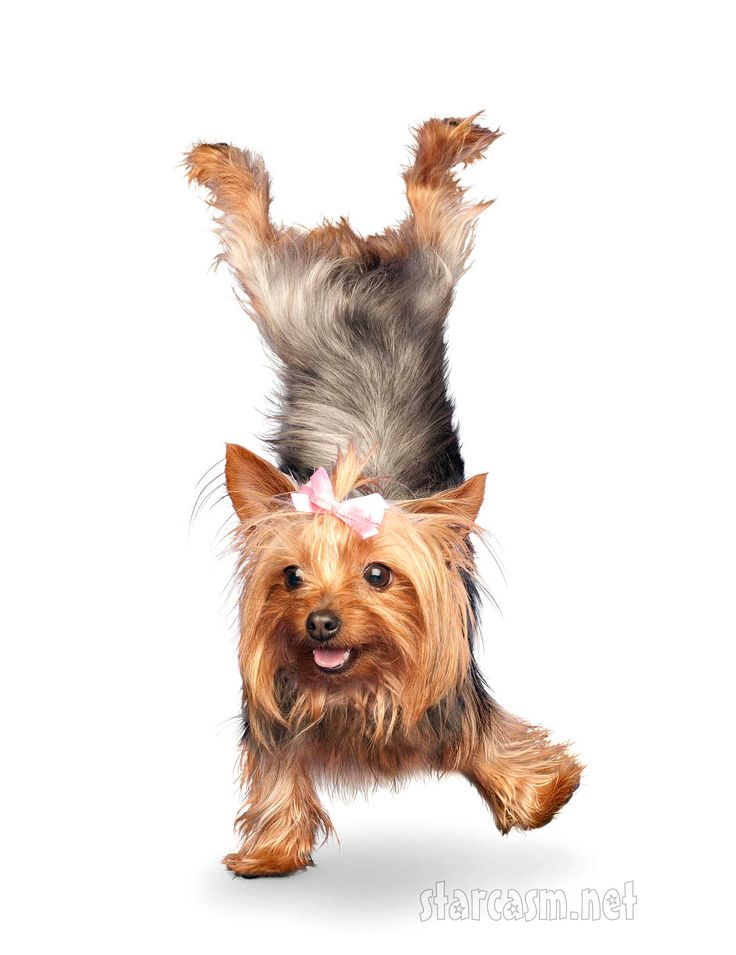 Hey Pet Parents: Increasing #DogFlexibility for your puppy companion starts with daily exercise to keep his body in trim condition.http://www.prolabspets.com/blog/blog/rachel/healthy-animal-companion-dog-flexibility-tips