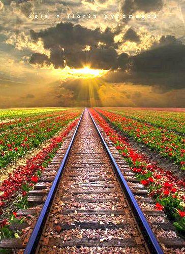 Rail Road - Romania