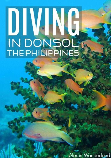 Diving in Donsol, the Philippines renewed my faith in diving and inspired and energized me to continue protecting the reefs so incredible underwater pockets of life like this can continue to exist.