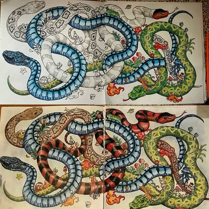 Adult Coloring Books Colouring Colour Book Color Art Summer Nights Water Colors Colored Pencils Snakes