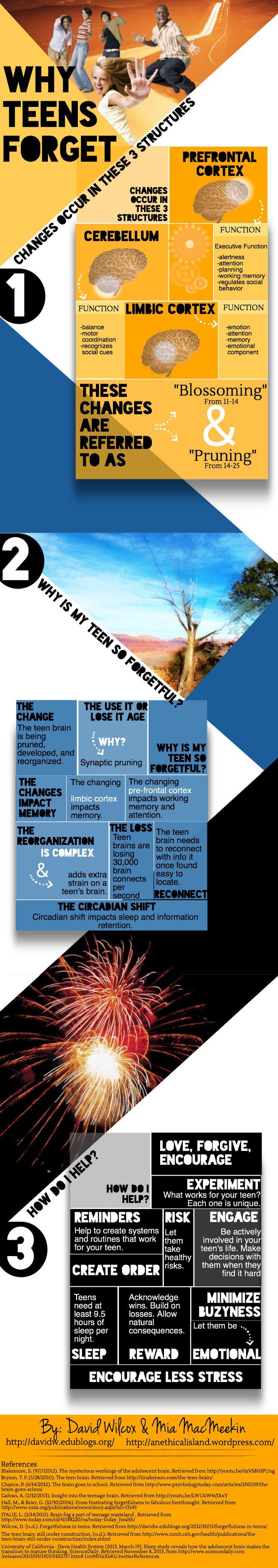 Why is my teen so forgetful?   An inforgraphic from Mia Macmeekin http://anethicalisland.wordpress.com