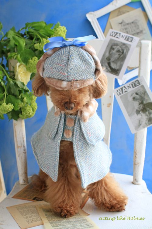 Sherlock Holmes Poodle