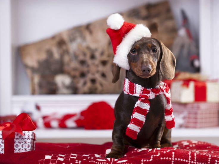 holidays with dogs - 5 ways our furbabies can join in the fun over the holidays <3 <3 <3 <3