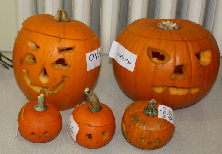 Always fun to see the differnet pumpkins people make at our halloween event (these were in 2013)