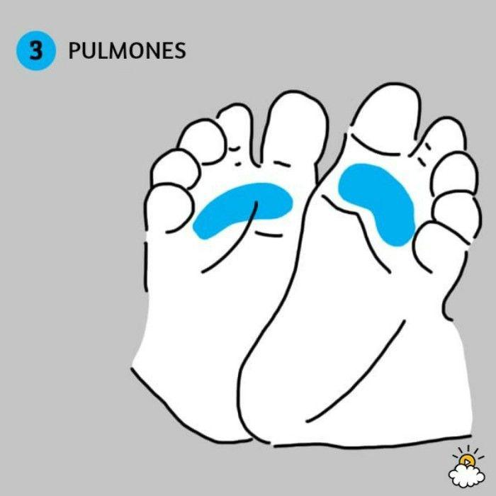 ilustración pulmones reflexiología de pies para salud de tu bebé