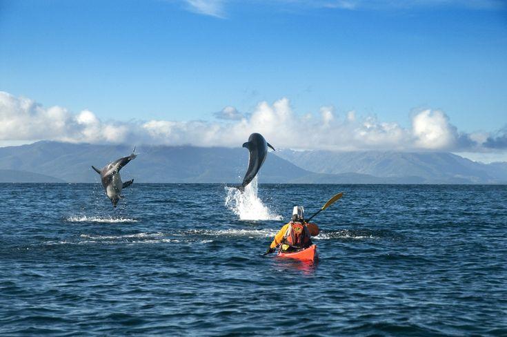 Kayak Dolphins Extreme Sports Travel Latin America