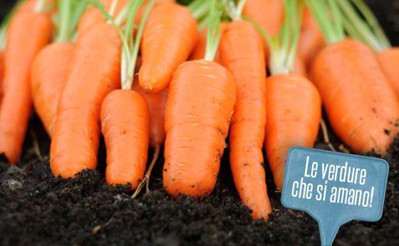 Giardino Zen Giardinieri In Affitto : Più di fantastiche idee su orto in giardino