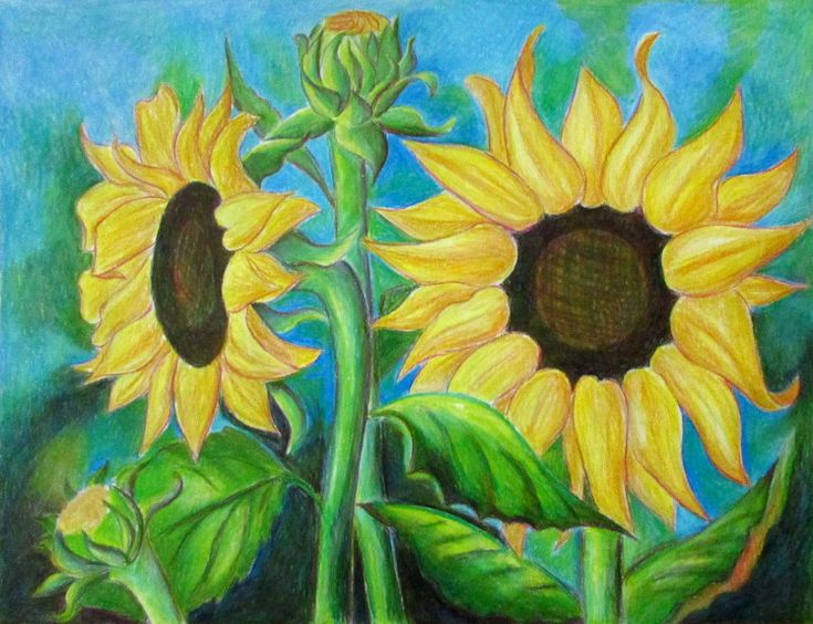 A very detailed step by step tutorial on how to draw sunflowers. Ten different renderings of the same picture using different materials for each one.