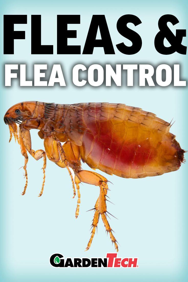 Identify And Control Fleas Garden Pest Control Fleas Garden Pests