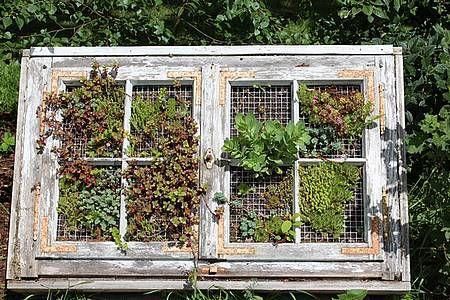 ▷ Grüne Wand ▷ Raffinierter Blickfang für die Wohnung