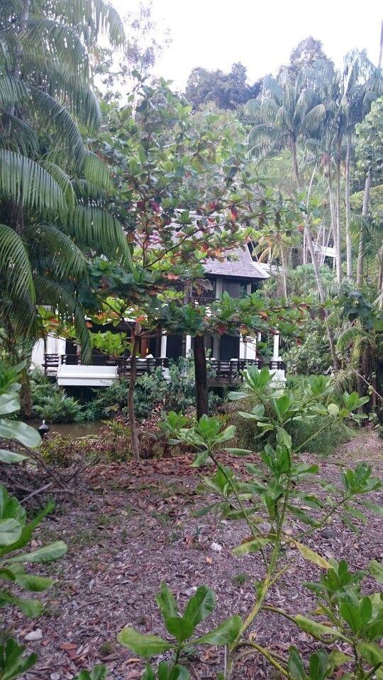 Palau Gaya