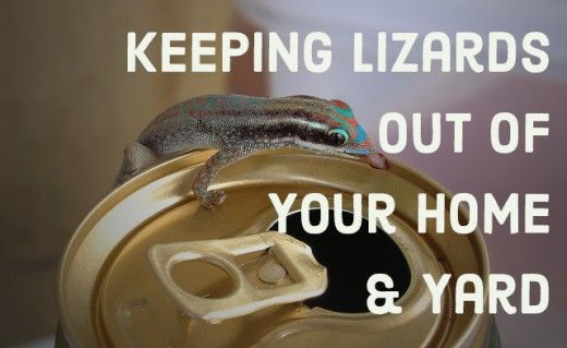 How to Get Rid of Lizards | Home, Animals and Lizards