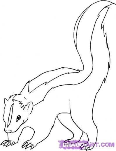 117 best SKUNK DRAWINGS images on Pinterest Skunks Animals and Draw