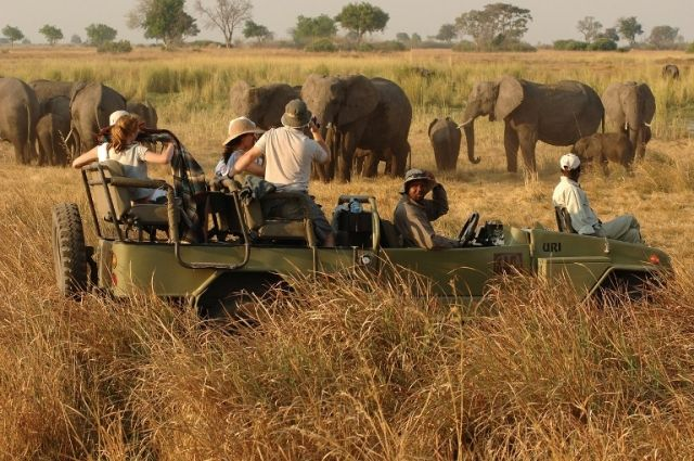 Guide and tracker team.  http://www.africanwelcome.com/botswana/botswana-private-game-lodges/kwara-camp-kwando-safaris-okavango-delta-botswana
