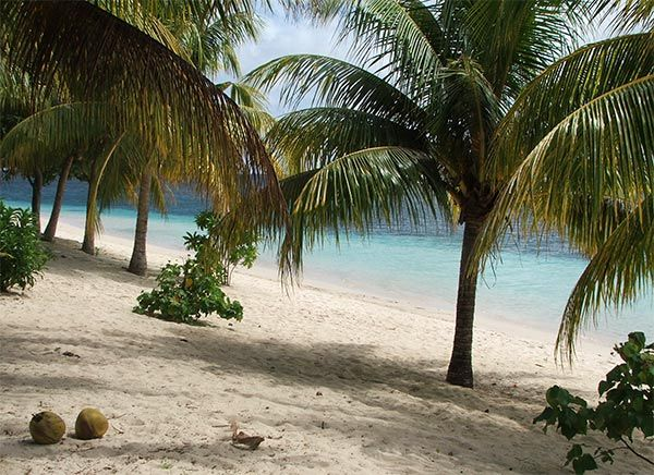 Golden Sand And Coconut Palms - Manase Beach.  Send me here plesse.