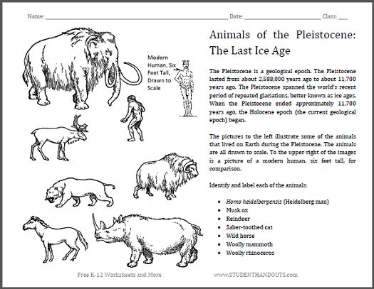 identify pleistocene epoch animals worksheet students in grades 4 and up identify common. Black Bedroom Furniture Sets. Home Design Ideas