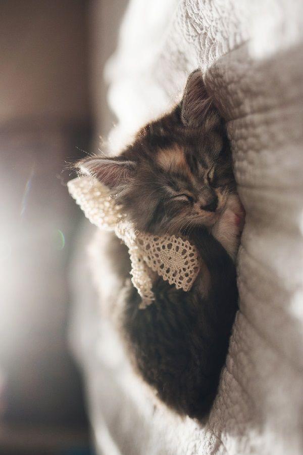 Liegenes Katzen baby
