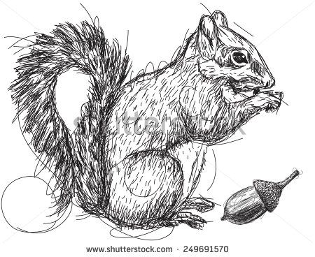 how to draw a realistic squirrel
