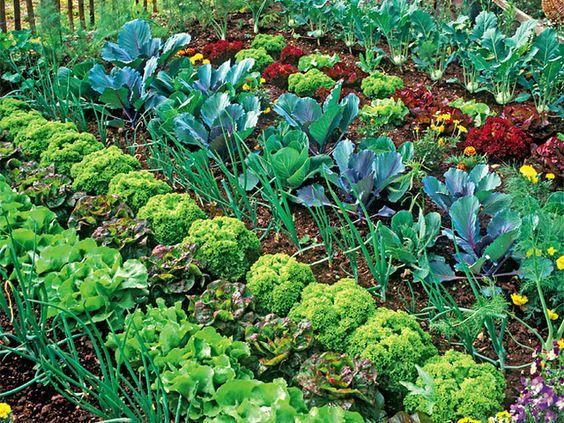 die besten 25 gurken rankhilfe ideen auf pinterest k rbis spalier brokkoli anbau und landgurke. Black Bedroom Furniture Sets. Home Design Ideas