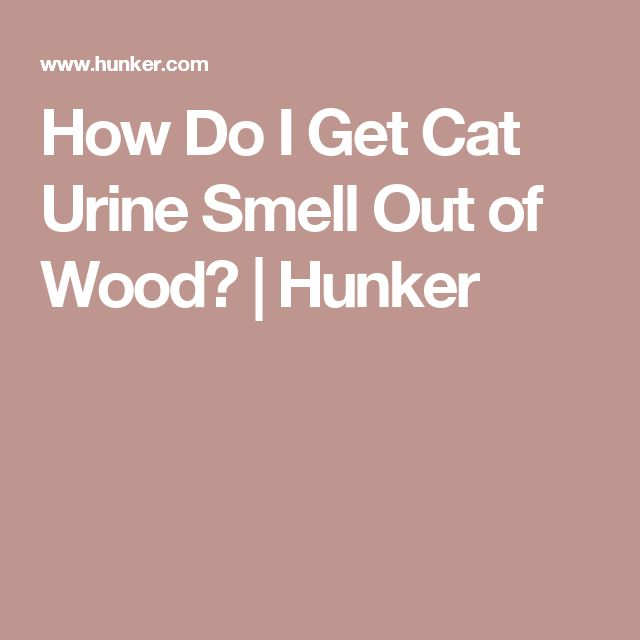 How Do I Get Cat Urine Smell Out of Wood? | Hunker