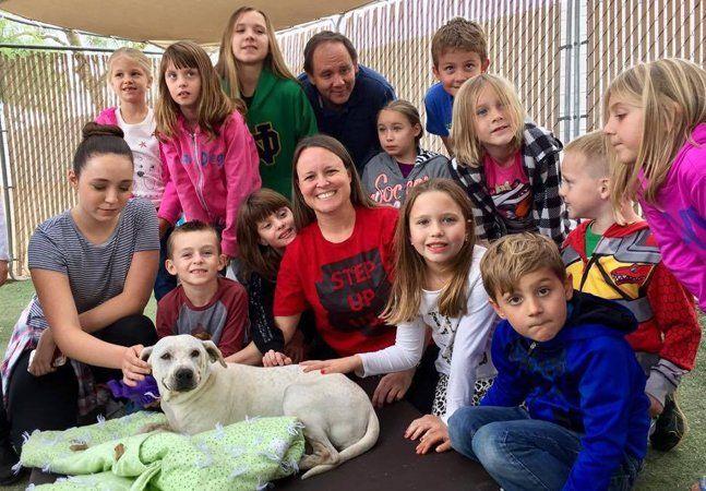 A vida nos abrigos pode ser solitária e fria para os cãezinhos à espera de uma família para lhes oferecer um lar. Ainda que o calor e o conforto de uma família de fato sejam insubstituíveis, a ONG Step Up USA resolveu oferecer para 100 cachorros de um abrigo na cidade de Gilbert, no estado do Arizona, um afago quente e macio em forma de cama. Junto com centenas de voluntários e doadores, a ONG reuniu 2 mil dólares para os materiais, e foram todos para a casa de Jill Smyros, fundador da Step…