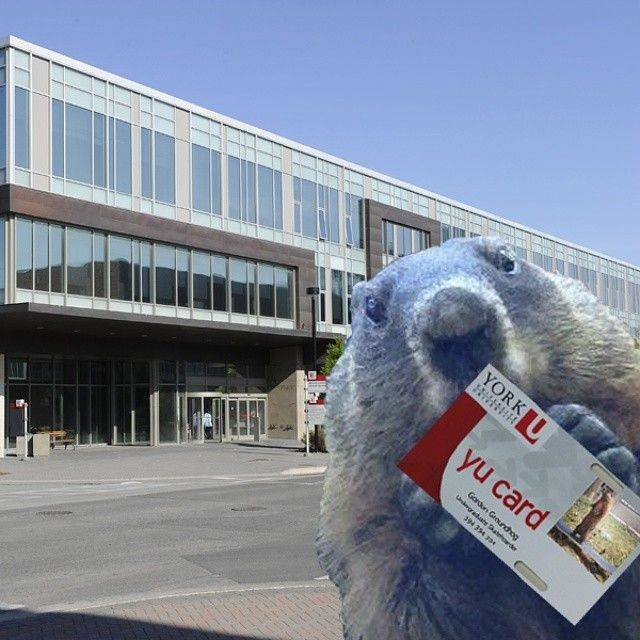 Gordon the #groundhog shows off his new student card. Check out http://yucard.info.yorku.ca for all of your student card needs. #yorku