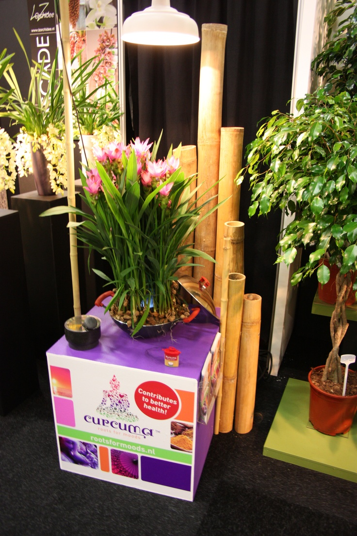 roots for moods op de Floraholland Trade Fair