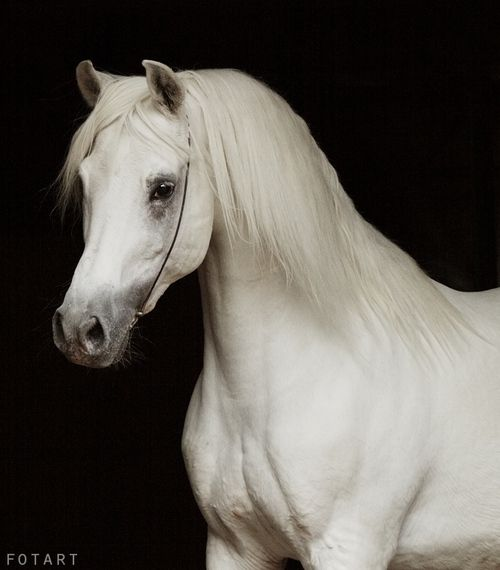 the arabian horse essay Plain and simple, the sport horse world holds an unacceptable intolerance of arabian horses hunter, jumper, dressage, and event riders are sodare i sayracist when it comes to this breed.