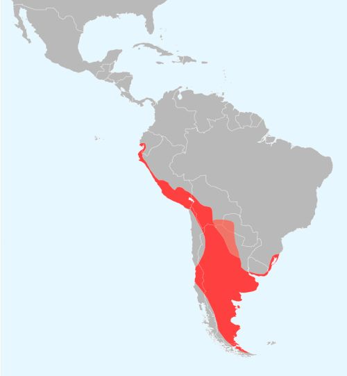 - The range of the poorly named Chilean flamingo